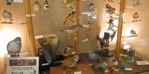 鳥の標本一覧